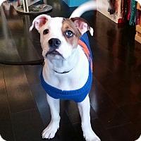Adopt A Pet :: Hercules - nashville, TN
