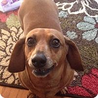 Adopt A Pet :: Mia - Marcellus, MI