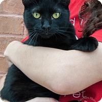 Adopt A Pet :: Phil - Atlanta, GA