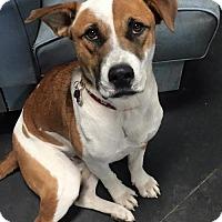 Adopt A Pet :: Benji - Grafton, WI