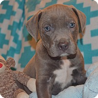 Adopt A Pet :: QUINCY - MILWAUKEE, WI