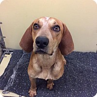 Adopt A Pet :: Red - Moody, AL