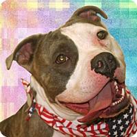 Adopt A Pet :: Kane - Cincinnati, OH