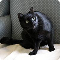 Adopt A Pet :: Raven - Gaithersburg, MD