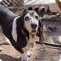 Adopt A Pet :: Trixie - Salt Lake City, UT