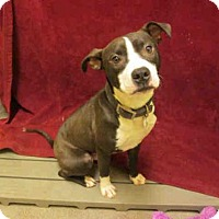 Adopt A Pet :: *REX - Upper Marlboro, MD