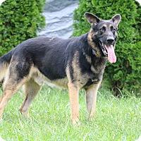 Adopt A Pet :: Dallas - Greeneville, TN