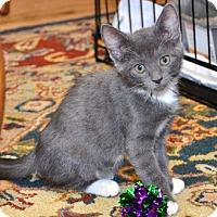 Adopt A Pet :: Porsche - Davis, CA