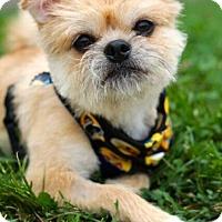 Adopt A Pet :: Benton - Mt. Prospect, IL