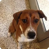 Adopt A Pet :: Dakota - Aiken, SC