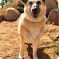 Adopt A Pet :: Smokey - San Diego, CA