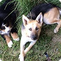 Adopt A Pet :: Kiara - Chewelah, WA