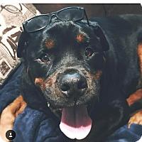 Adopt A Pet :: REBEL - New Smyrna Beach, FL