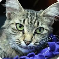 Adopt A Pet :: Gabby - Evansville, IN