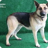 Adopt A Pet :: LOBA - Hanford, CA