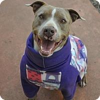Adopt A Pet :: Naga - Graniteville, SC