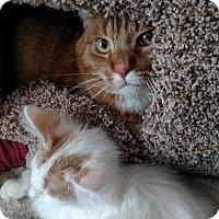 Adopt A Pet :: Sammy - Eugene, OR