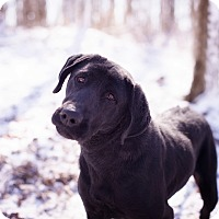 Adopt A Pet :: Mimi - Brattleboro, VT