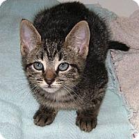 Adopt A Pet :: Peppre - Delray Beach, FL