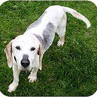 Adopt A Pet :: Winchester - Novi, MI