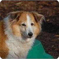 Adopt A Pet :: Bandit - Ft. Myers, FL