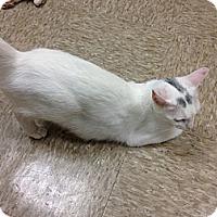 Adopt A Pet :: Ariel - Fort Lauderdale, FL