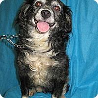 Adopt A Pet :: YALE - Elk Grove, CA