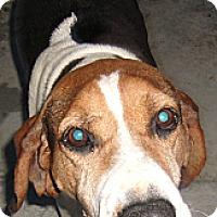 Adopt A Pet :: HANNA - Coudersport, PA