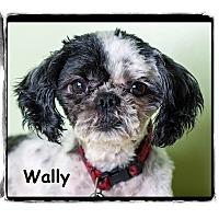 Adopt A Pet :: Wally - Warren, PA