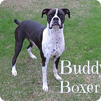 Adopt A Pet :: Buddy - Scottsdale, AZ