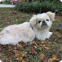 Adopt A Pet :: Shakers - Virginia Beach, VA
