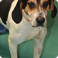 Adopt A Pet :: Hickory: Norwood - Cincinnati, OH