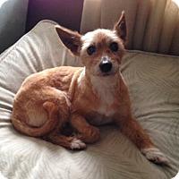 Adopt A Pet :: Rhonda - Mississauga, ON