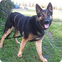 Adopt A Pet :: Athena - Pleasant Grove, CA