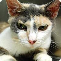 Adopt A Pet :: Carmen - Bradenton, FL