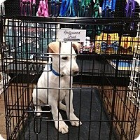 Adopt A Pet :: Zack - Covington, TN