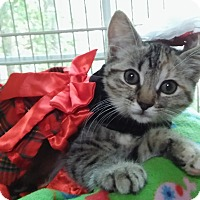 Adopt A Pet :: Holly (3-month girl) - Witter, AR