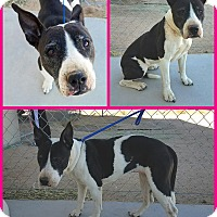 Adopt A Pet :: Peekaboo - California City, CA