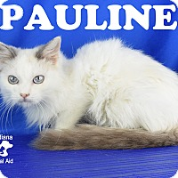 Adopt A Pet :: Pawline - Carencro, LA