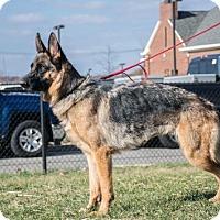 Adopt A Pet :: Faith Ann - Bridgewater, NJ