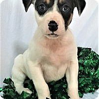 Adopt A Pet :: Clarice - Mooresville, NC
