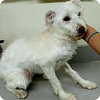 Adopt A Pet :: Frosty-ADOPTION PENDING - Boulder, CO