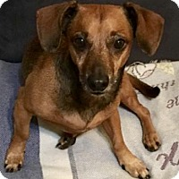 Adopt A Pet :: Neo - West Palm Beach, FL