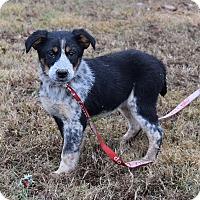 Adopt A Pet :: Isabella - Plainfield, CT