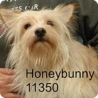 Adopt A Pet :: Honey Bunny - Alexandria, VA