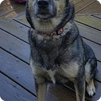 Adopt A Pet :: Abby - Dayton, MD