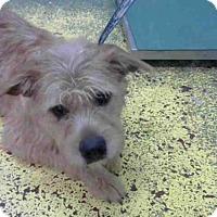 Adopt A Pet :: TIMBO - Atlanta, GA