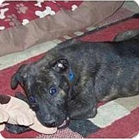 Adopt A Pet :: Zeus - Antioch, IL
