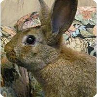 Adopt A Pet :: Henrietta - Williston, FL