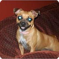 Adopt A Pet :: Peanut - Glastonbury, CT
